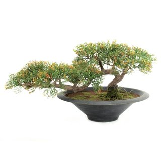 Europalms Bonsai-Zeder, 40cm