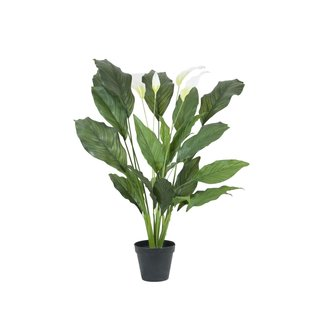 Europalms Spathiphyllum deluxe, 83cm